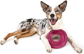 West Paw Zogoflex Air Dash Dog Frisbee