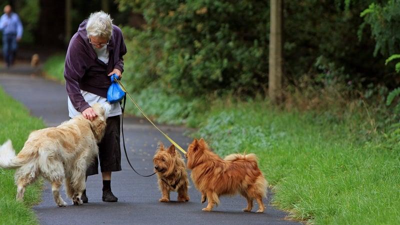 Woman Walking Multiple Dogs
