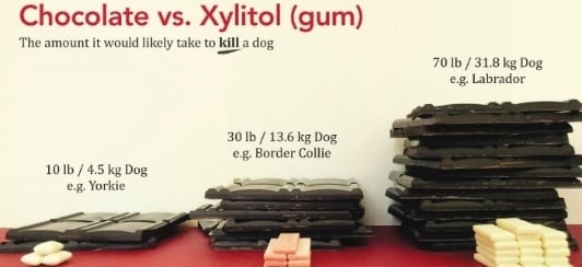 xylitol is more toxic than chocolate for dogs