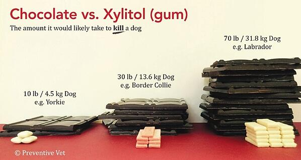 How much Xylitol gum vs Chocolate would it take to kill a dog?