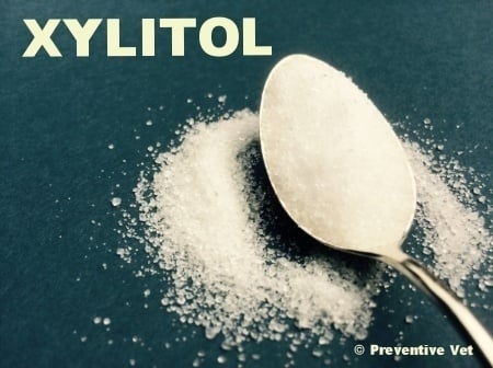 Xylitol-sugar-free-sweetner-spoon.jpg