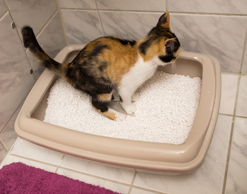 Yellow Litter Box