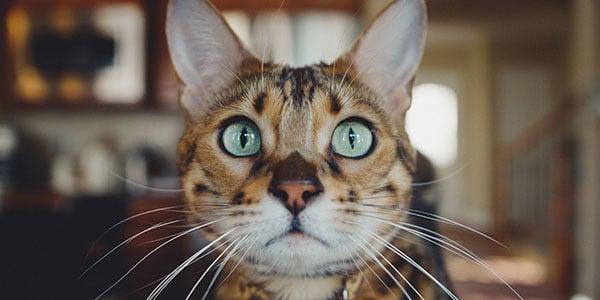 adopting another cat