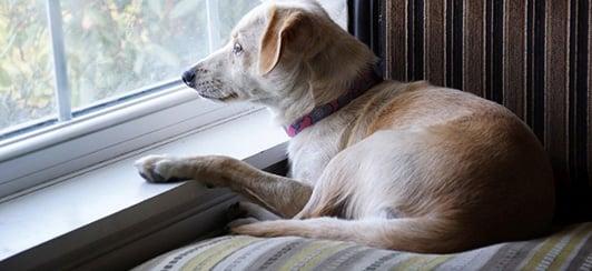 alert barking