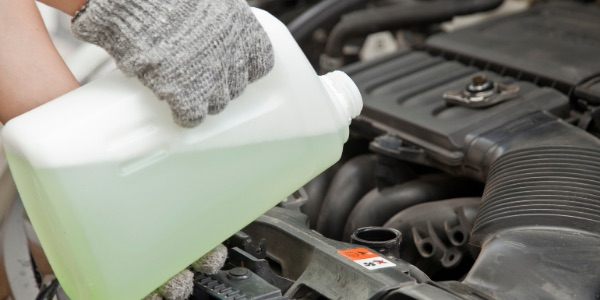 antifreeze is poisonous to pets