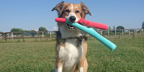 best fetch stick for dogs