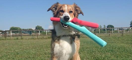 Fetch toys dogs love