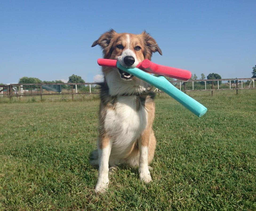 best fetch stick new color