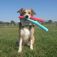 best fetch stick