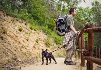 black french bulldog on hike with owner