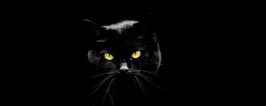 Black Cat Black Background