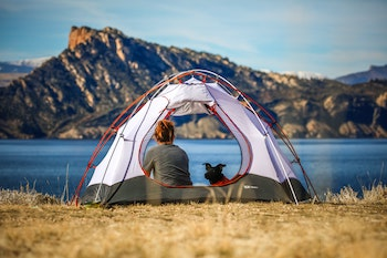 Dog and person in tent