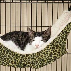 OCSOSO Cat Hammock
