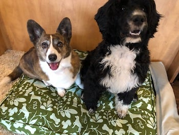 Sookie and Clover on Molly Mutt Bed