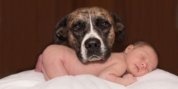 baby and family dog photo