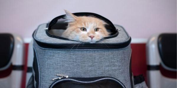cat in carrier in veterinarian waiting room
