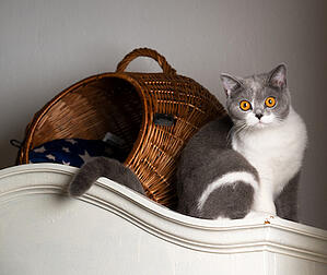 cute cat by basket