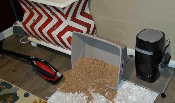 cat-litter-box-mess