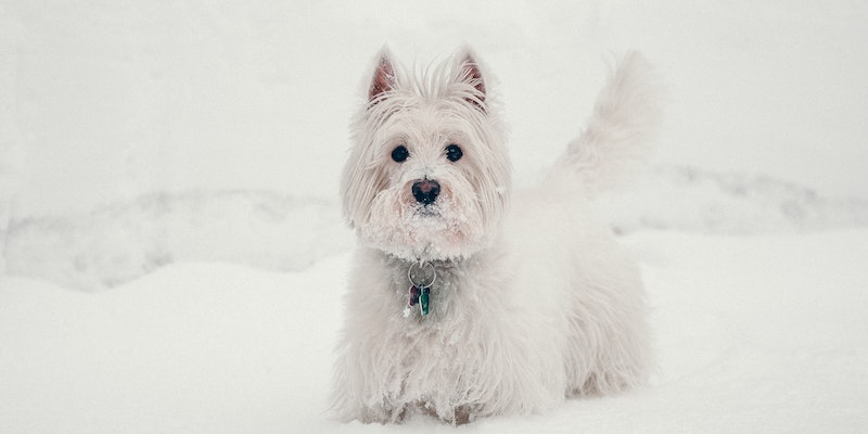 dog-paw-pads-in-snow