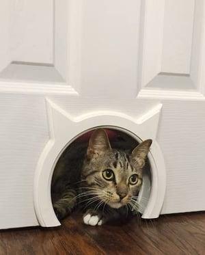 kitty-pass-door-cut-out