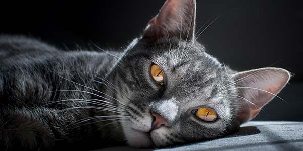 bringing new cat home how to make them more comfortable