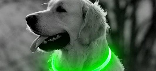 bseen-light-up-dog-collar