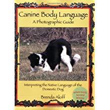 canine body language
