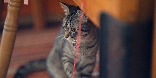 cat and string danger