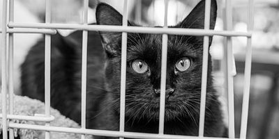 cat at shelter - register microchip for faster reunion