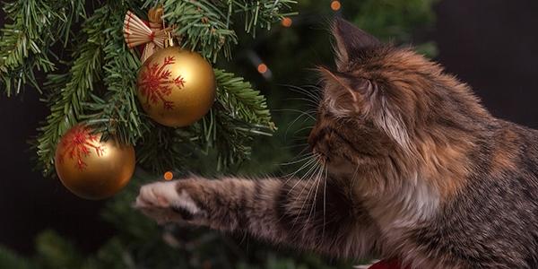 cat batting at ornaments in christmsa tree
