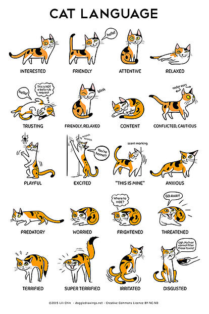 cat body language infographic from the amazing Lili Chin
