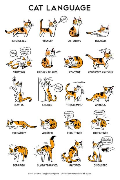 cat body language infographic from the amazing Lili Chin