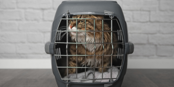 cat carrier anxiety