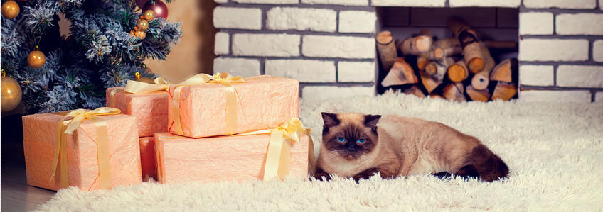 cat christmas header 850x300