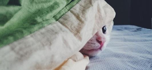 cat hiding blanket