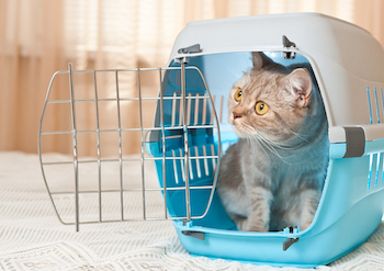Caring for Your Foster Cat