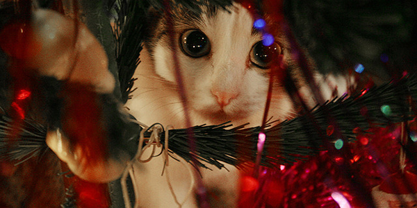 cat in christmas tree dangers like tinsel