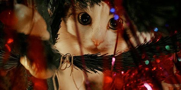 cat in christmas tree dangers like tinsel