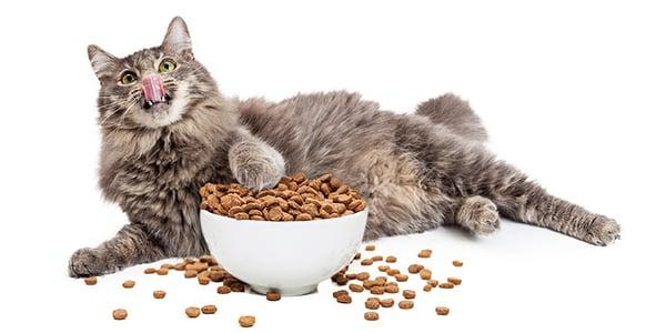 cat kibble junkie