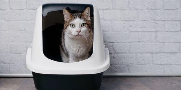 cat litter box - canva 600