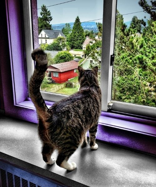 cat looking out of window of a 2 story house-Pix