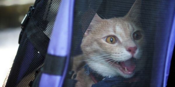cat overheating in a carrier