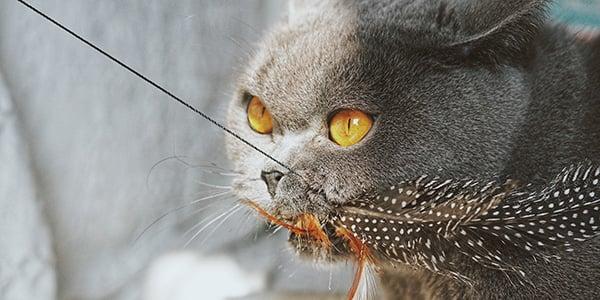 cat prey drive toys