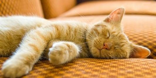 cat sleeping peacefully