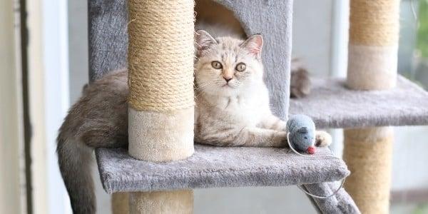 cat toys provide great enrichment