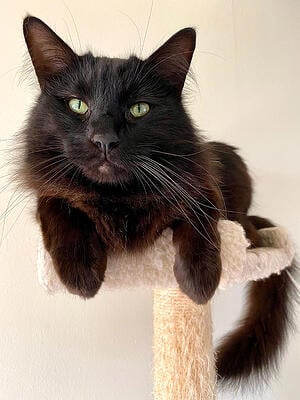 cat trees are a necessity