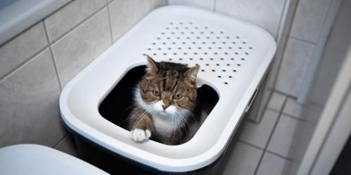 cat using top load litter box