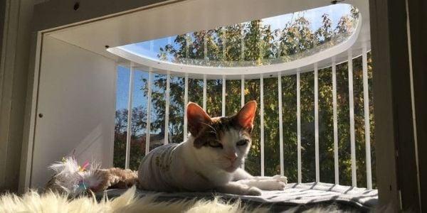 cat window enclosure