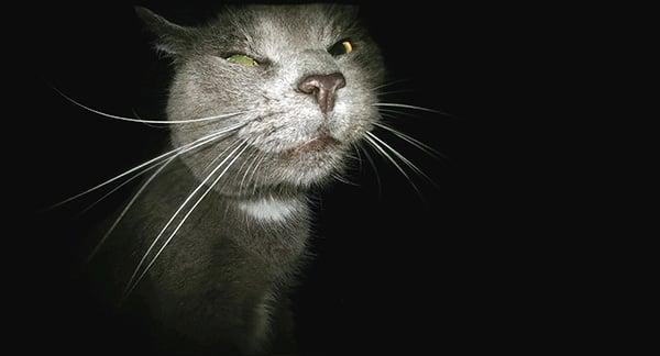 Cat Face in the Dark