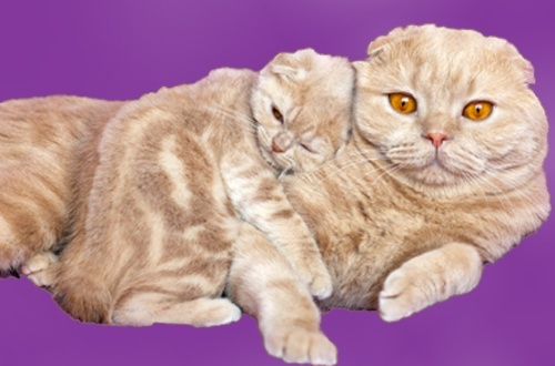 cat and kitten health and safety tip book
